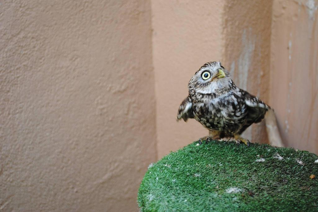 Centro Recuperación Fauna Silvestre LAS DUNAS