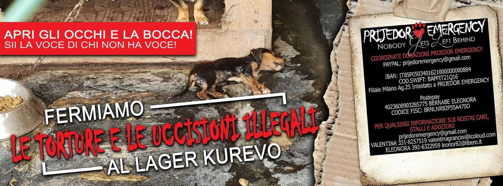 Prijedor Emergency - daily food for dogs in shelter in Bosnia