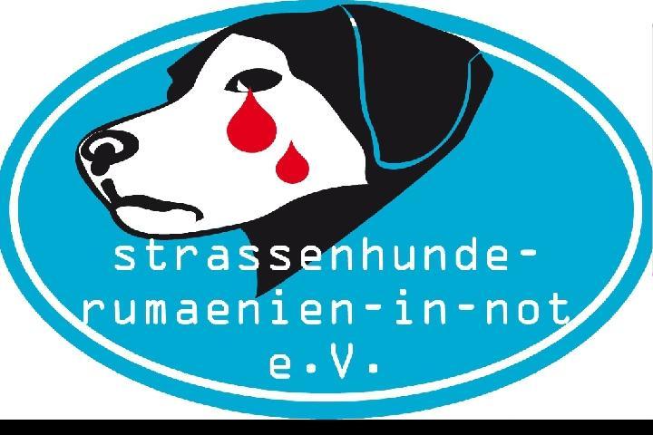 strassenhunde Rumänien in Not