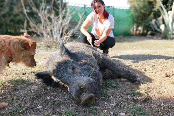Micro Santuario Movimiento Animal