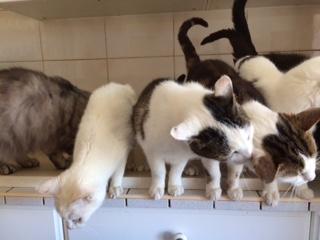 Aide aux chats sans logis