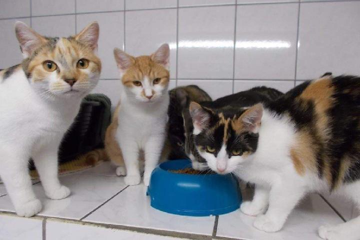Katzenhilfe Hoyerswerda e. V.