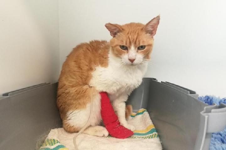 Fondo para Urgencias de los gatos de Luchando Por Ellos Asociación