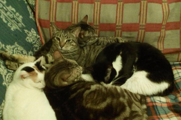 Ayuda para hogar de los gatos de Rakel
