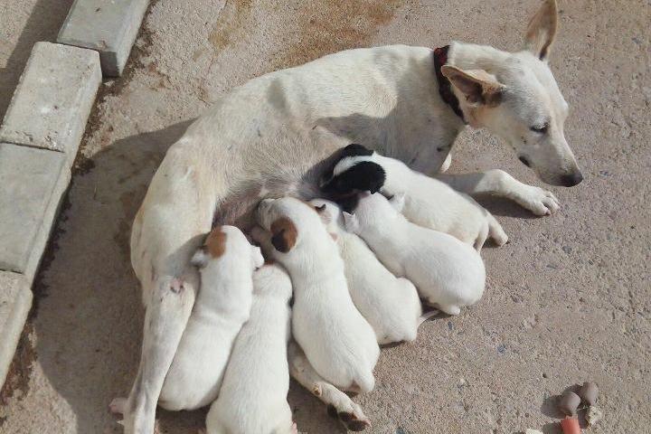Rescatados de la Perrera