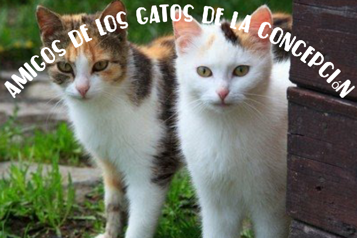 Amigos de los Gatos de la Concepción
