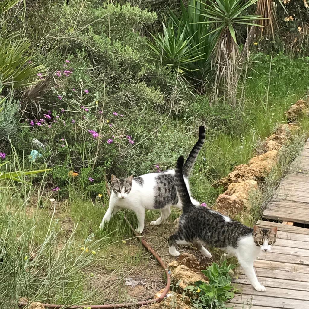 Ayuda a los gatitos callejeros de El Portil, Huelva