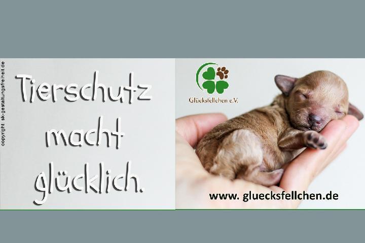 Glücksfellchen Tierhilfe e.V.