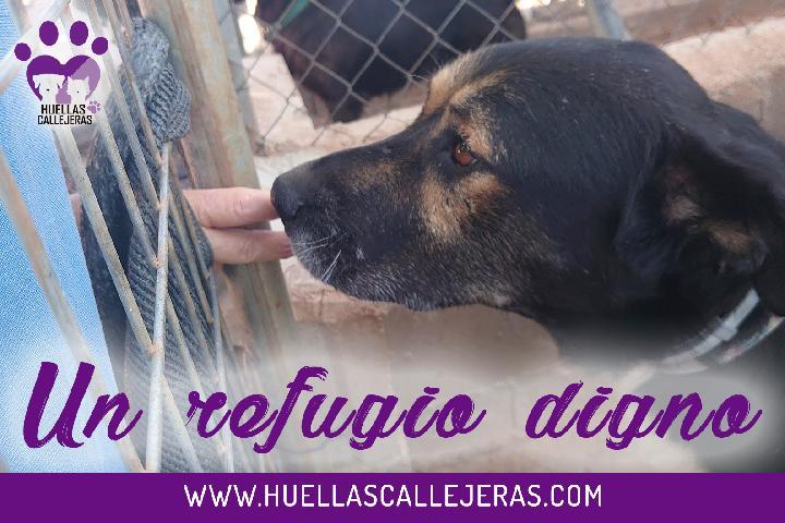 UN REFUGIO DIGNO PARA ELLOS   Huellas Callejeras