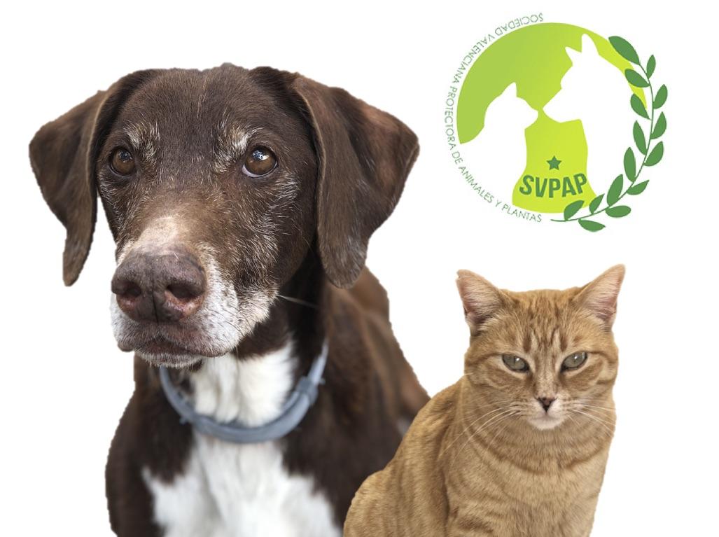 Animal Shelter SVPAP