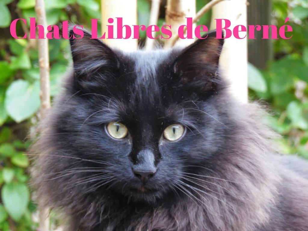 Association Chats Libres de Berné