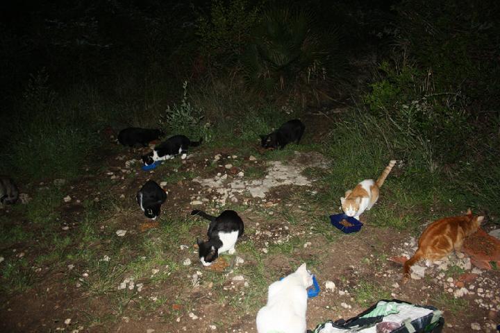 Asociación AICA ayudamos a los gatos y perros que nadie quiere