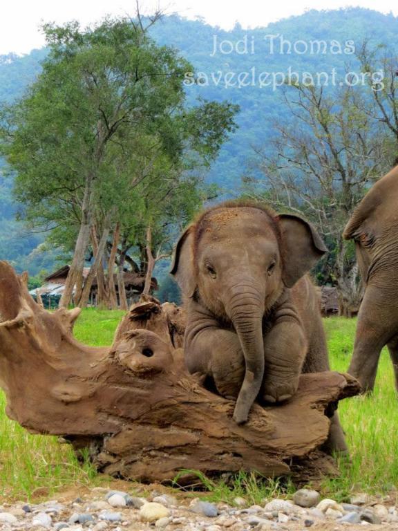 Elephant Nature Park - micro don Europe -