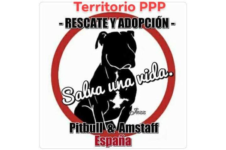 Rescate y Adopcion d Pitbull y Amstaff España