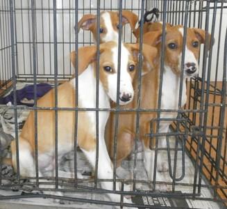 PAWS-PATAS Sociedad Protectora de animales