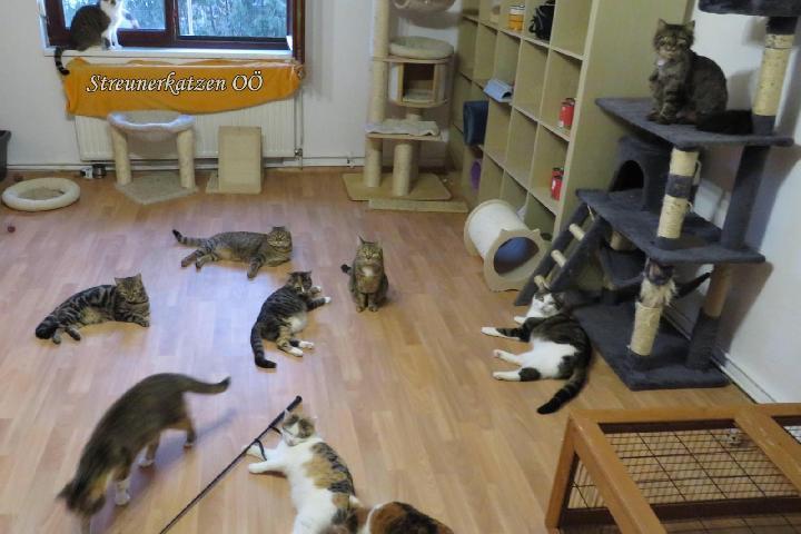 Freigehege für Pflegekatzen
