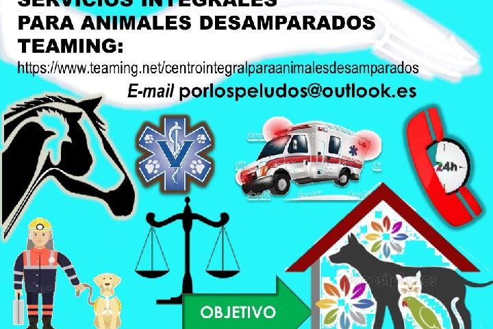 Comprehensive Services for Destitute Animals Spain