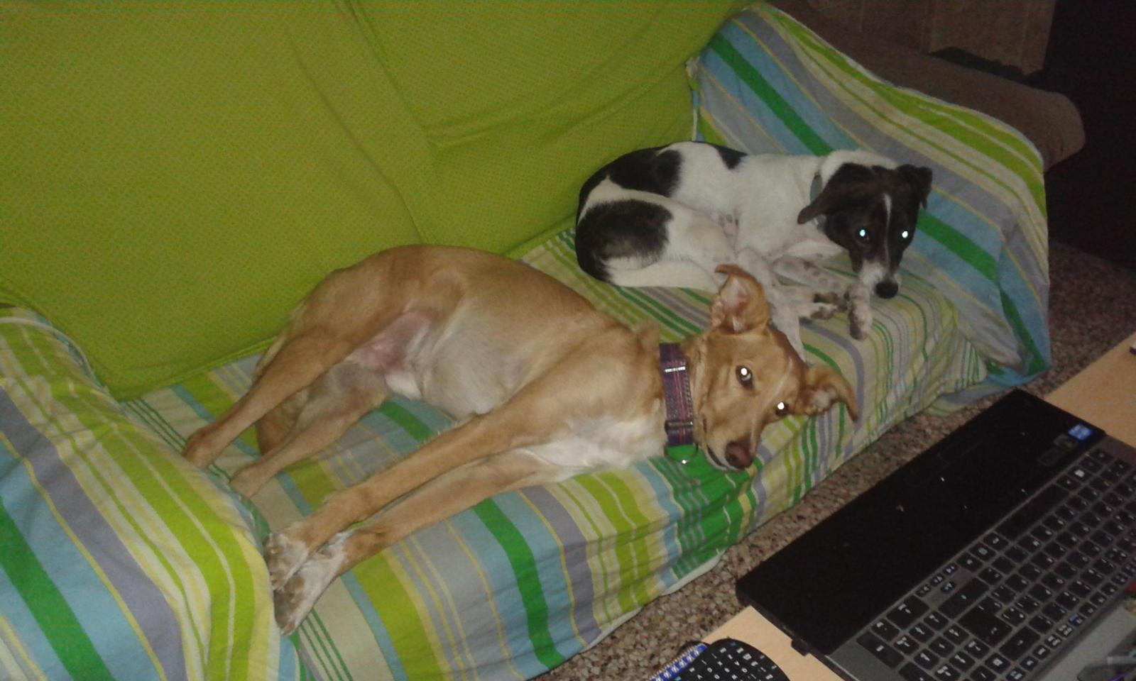 Rey y Doggy buscan madrinas y padrinos