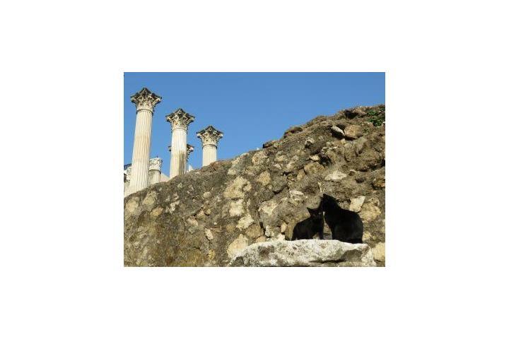Ayuda felina - El Arca de Noé de Córdoba