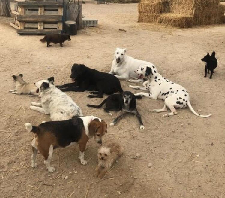 Finca la Castellana Animal Welfare Centre