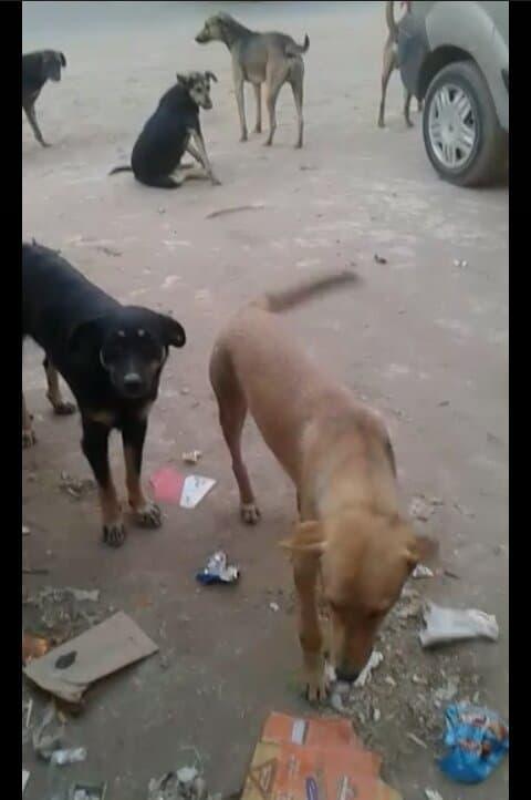 Soutien pour chiens et chats errants(Agadir) Zina