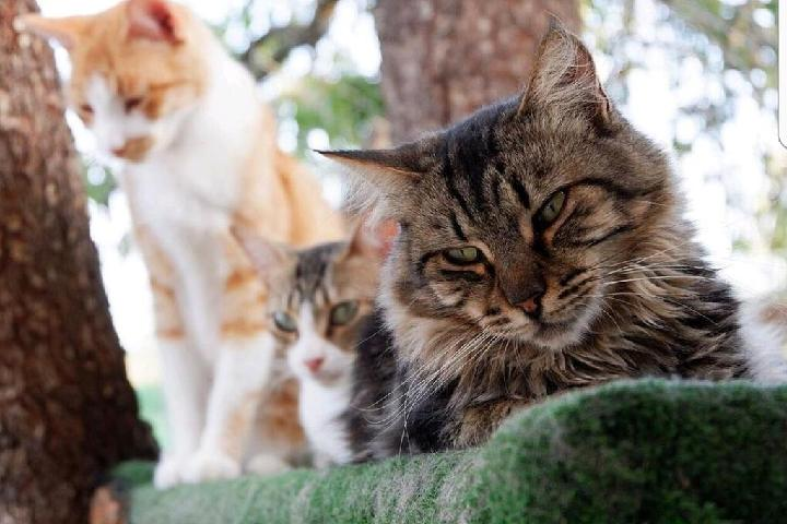 Con G de gato