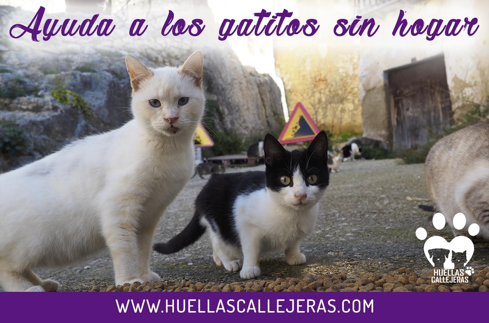 AYUDA A LOS GATITOS SIN HOGAR | Huellas Callejeras