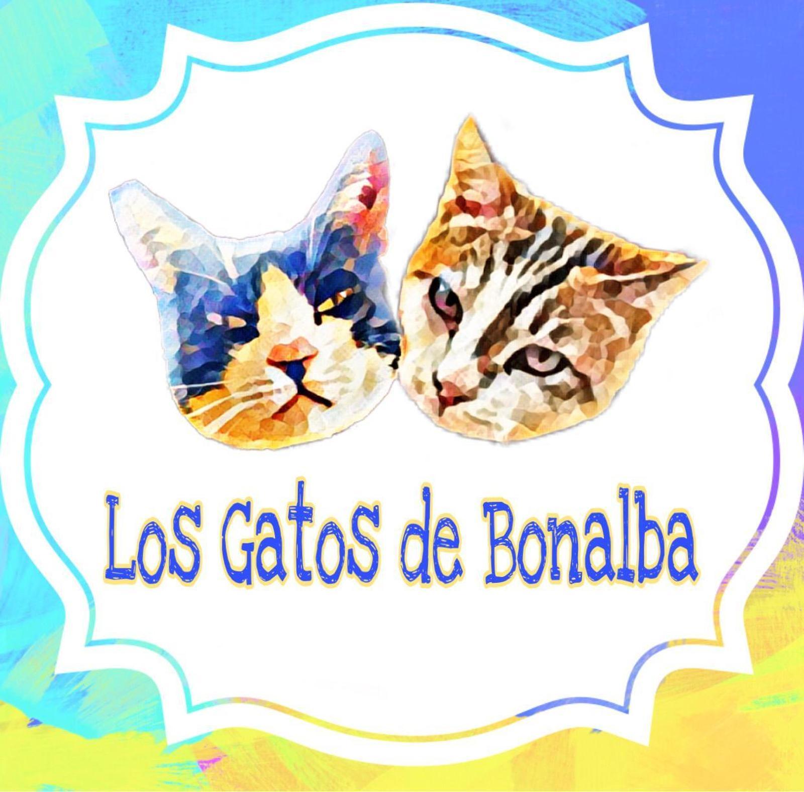 Los Gatos de Bonalba