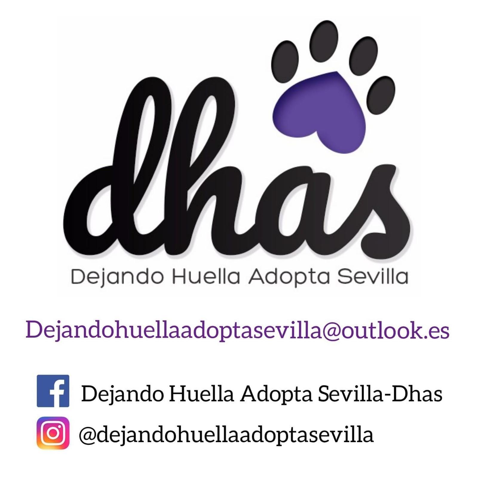 DHAS Dejando Huella Adopta Sevilla