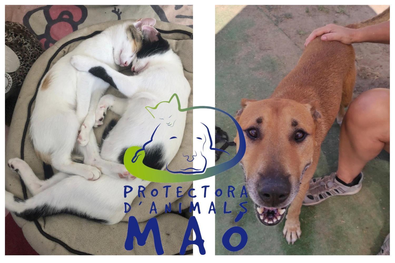 Protectora d'Animals Maó (Menorca) Tierschutzverein für Hunde und Katzen