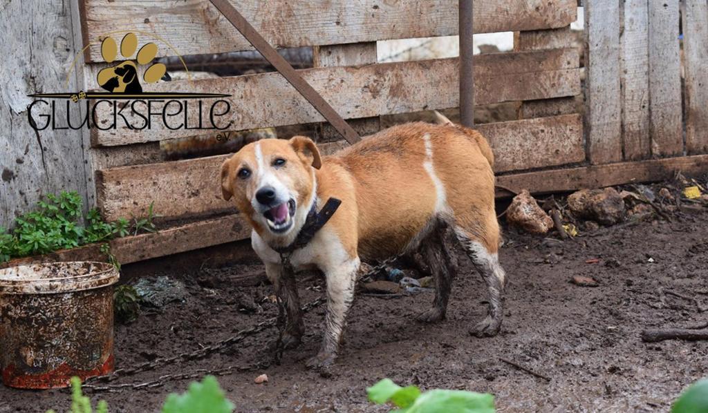 Futter und medizinische Versorgung türkischer Straßenhunde
