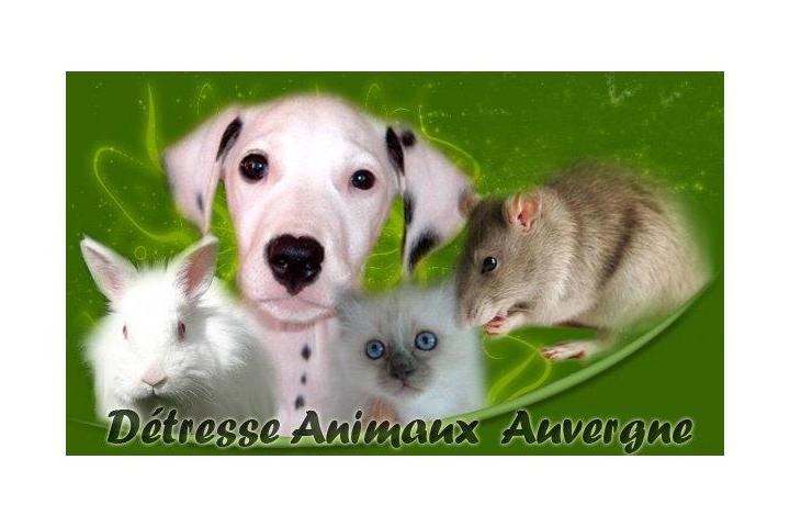 Association Détresse Animaux Auvergne