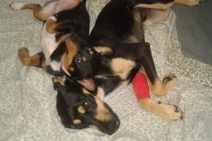 Gastos veterinarios el Hogar de Lluvia