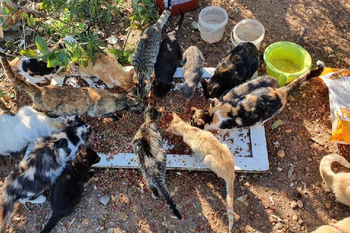 Alimentar- esterilizar colonias Dameotravida