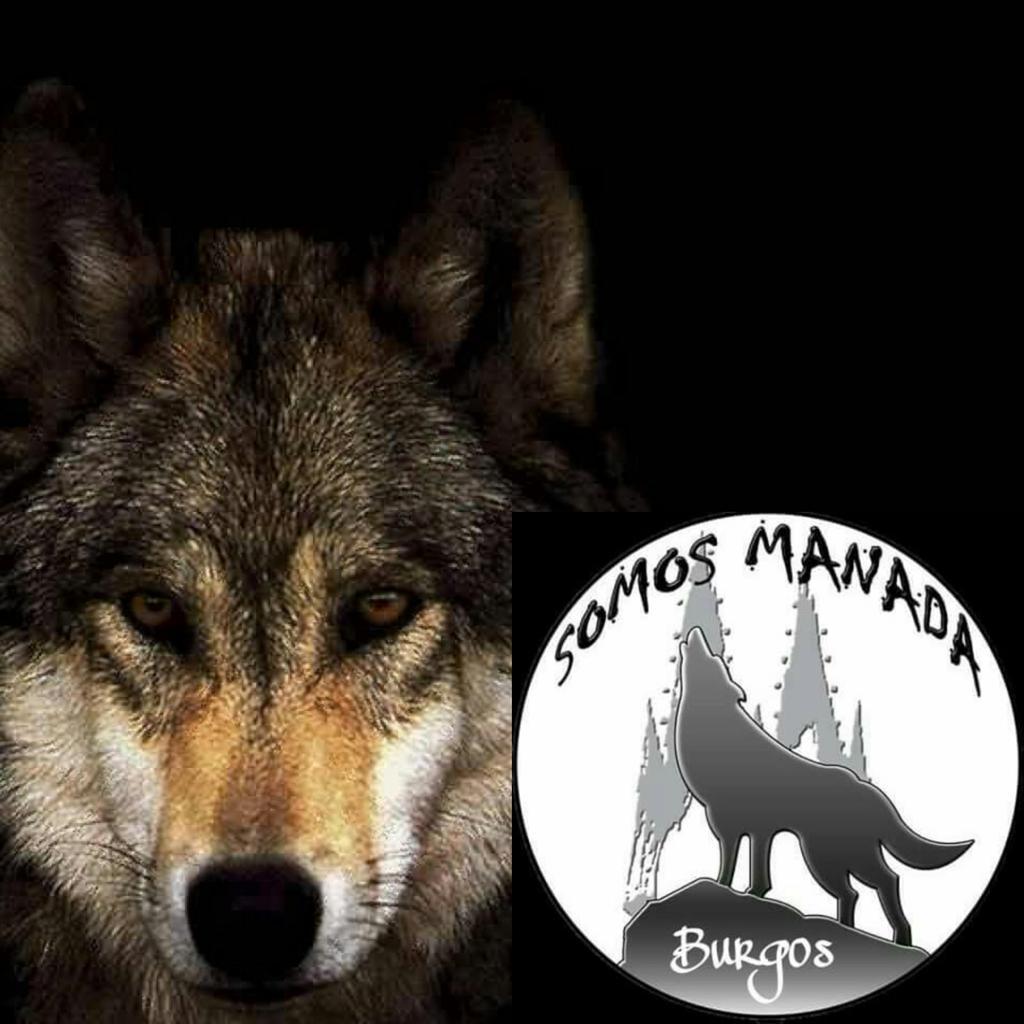 Somos Manada Burgos