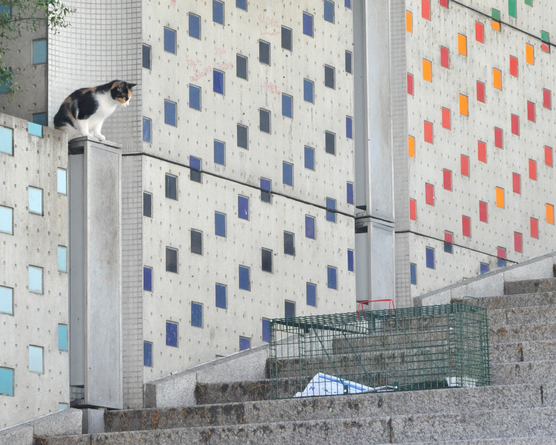 Stérilisation des chats de La Défense (92)