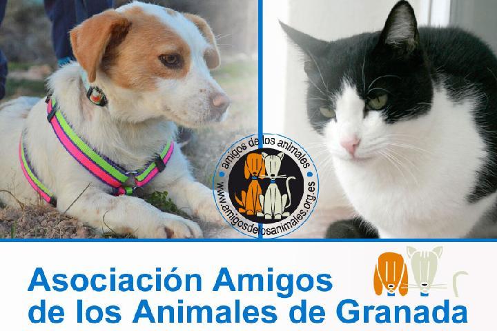 Amigos de los Animales de Granada