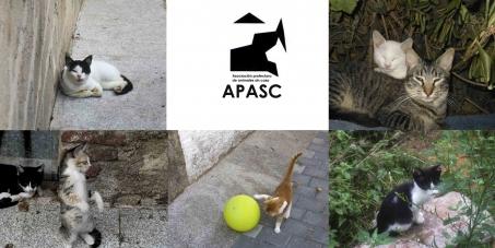 APASC Lloret