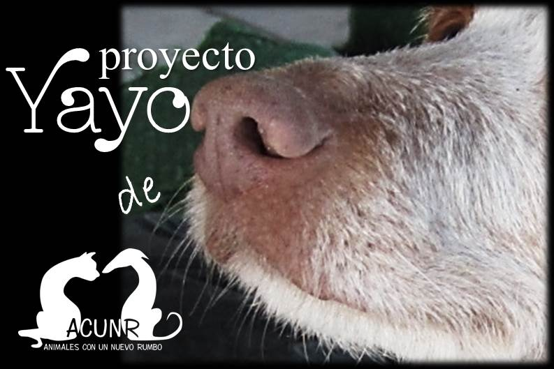 Proyecto Yayo de Acunr