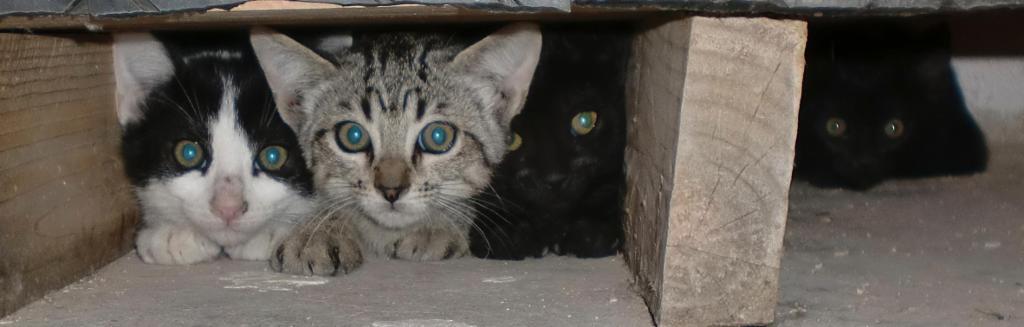 La Gatera-Adopt a cat