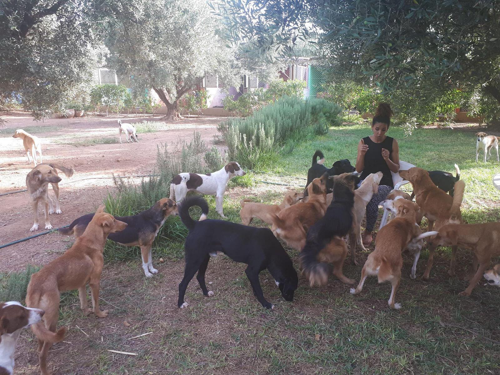 Refuge pour chiens et chats Marrakech