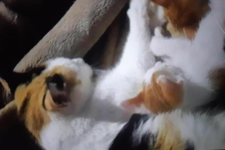 Les petits Anges de Fatiha((les chats errants)