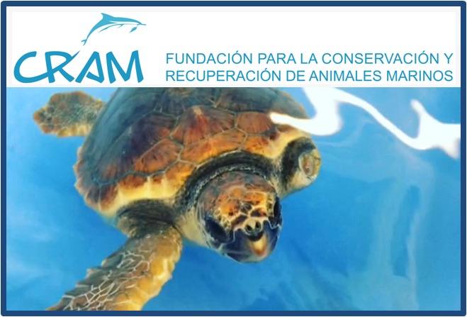 Fundación CRAM: ayuda a conservar las tortugas marinas