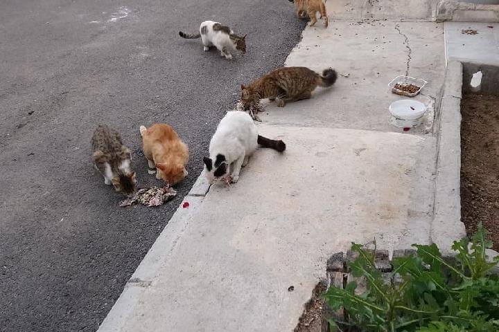 Kitty&dog Care Tierschutz Strassentiere