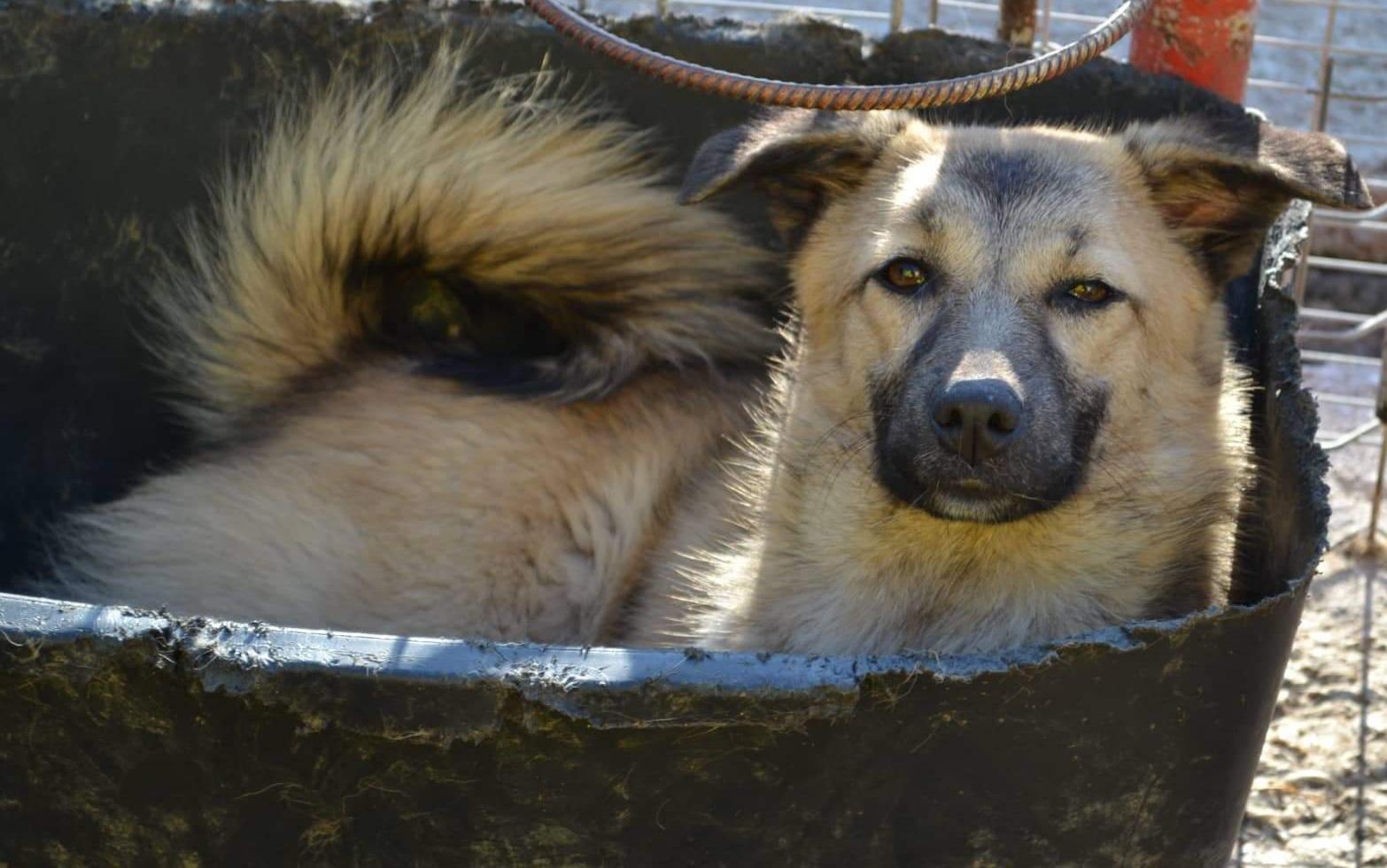 Homeless Dogs Romania e.V