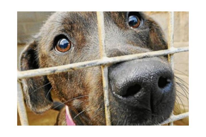 Pixi rescate en perreras