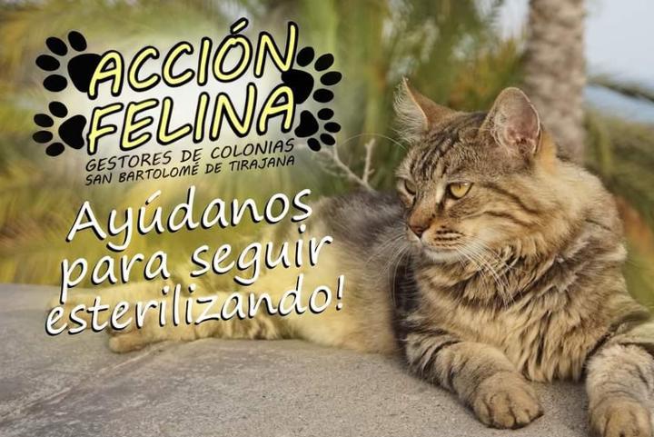 Acción Felina - Gestores de colonias San Bartolomé de Tirajana