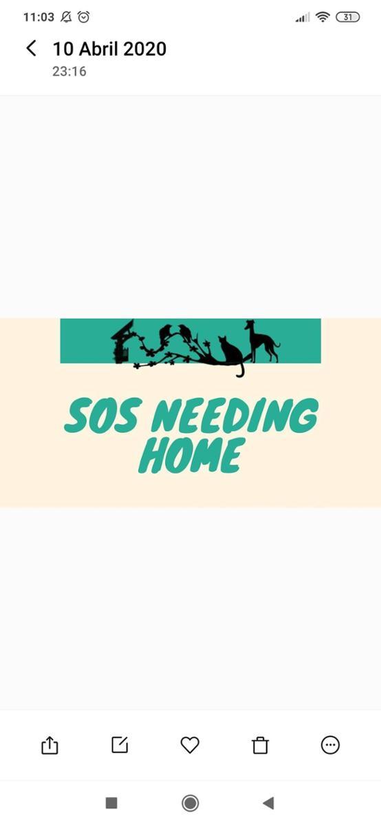 Sos Needing Home