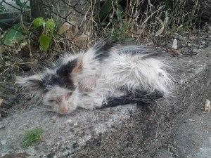 vergessene Katzen in Not