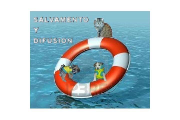 Asociación Salvamento y Difusión